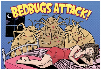 你知道bug是什么意思吗?